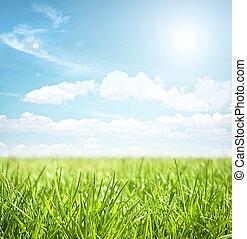 grässlätt, sommar, landskap