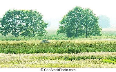 grässlätt