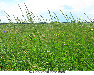 grässlätt, stor, grön