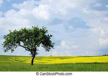 grässlätt, träd