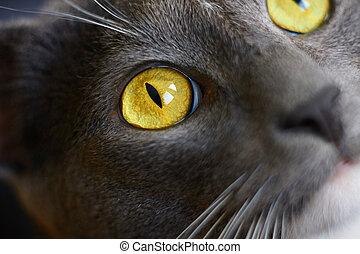 grå, ögon, hus, gul katt, lysande