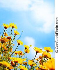 grænse, hen, blomster, himmel