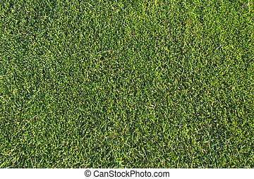 græs, mønster