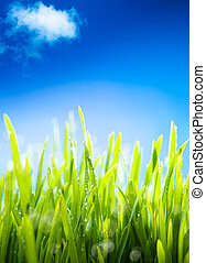 græs, naturlig, forår, forår, dug, baggrund, frisk,...
