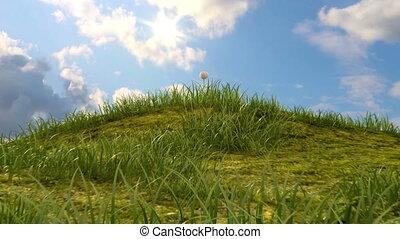 græsbevoksede, høj, hos, chamomile