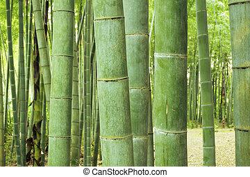 grön, bambu skog