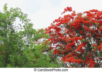grön, Blomstrar, träd, röd