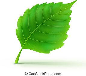 grön, detaljerad, blad