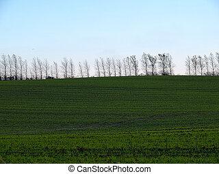 grön, dramatisk himmel, landskap, fält