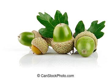 grön, ekollon, frukter, med, bladen