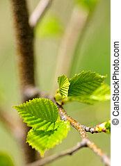 grön, fjäder, bladen