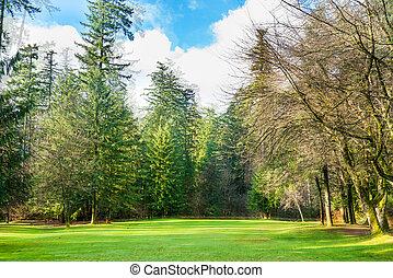 grön gräsmatta, med, träd, i parken