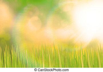 grön, grässlätt, och, solljus