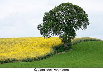 grön, gul
