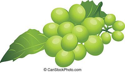 grön, kvist, druva