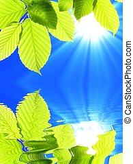grön, lämna, och, vatten
