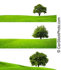 grön, natur