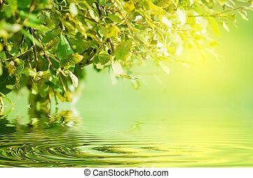 grön, nature., sol, vatten reflex