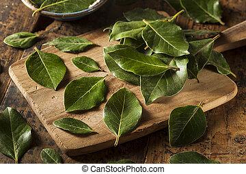 grön, organisk, vik leaves