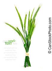 grön, råg, grov spik, (secale, cereale), vita, bakgrund.