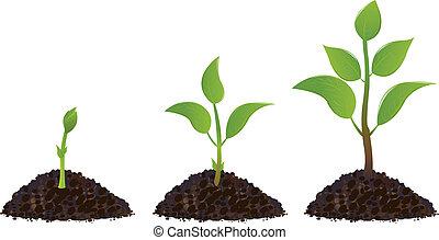 grön, ung, planterar