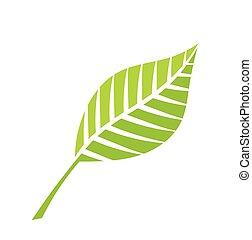 grön, vektor, blad