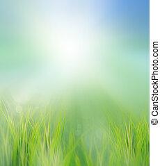 gröna gärde, in, morgon, lätt