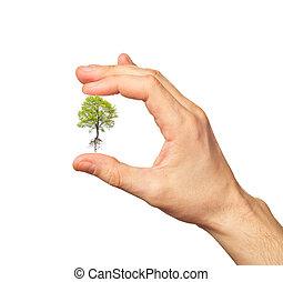 gröna vita, träd, hand