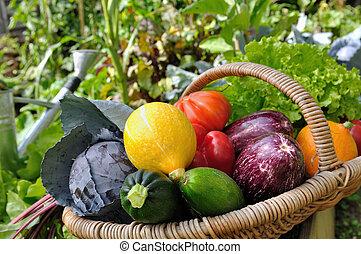grönsaken, färgrik