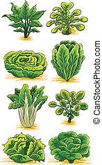 grönsaken, grön, kollektion