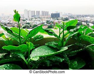 grönsaken, mini, trädgård, lantgård, på, taktopp, in, urban,...