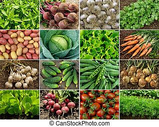 grönsaken, och, grönt