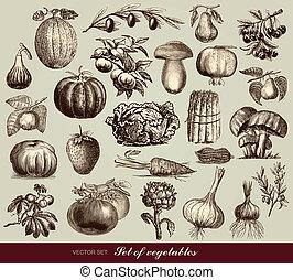 grönsaken, vektor, sätta