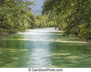 grönt flod, med, träd, in, sommar