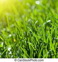 grönt gräs, bakgrund, med, sol stråla