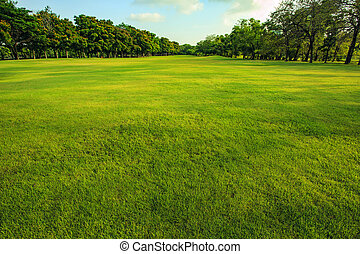 grönt gräs, fält, av, publik parkera, in, morgon, lätt