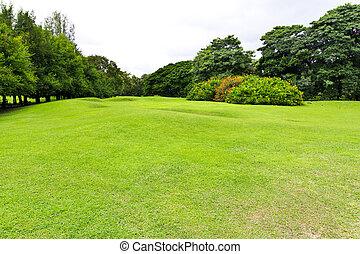 grönt gräs, fält, i parken
