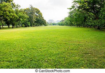 grönt gräs, fält, in, storstad, parkera