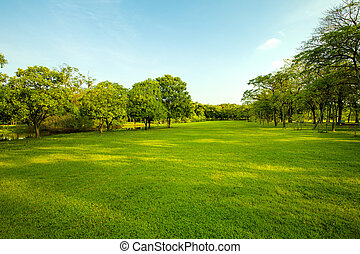 grönt gräs, fält, in, urban, publik parkera