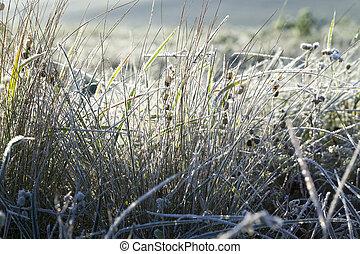 grönt gräs, in, den, frost