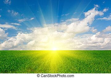 grönt gräs, skörd, mot, den, blåttsky
