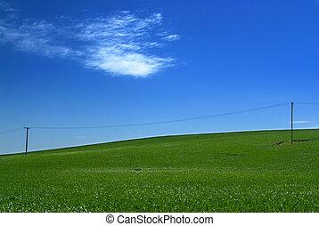 grönt kulle