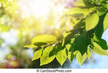 grönt lämnar, en filial, med, den, sol, in, den, bakgrund