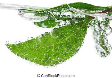 grönt lämnar, in, vatten