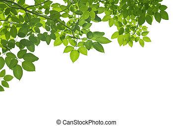 grönt lämnar, vita, bakgrund