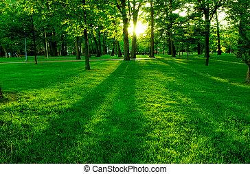 grönt parkera