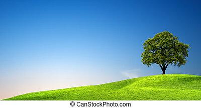 grönt träd, hos, solnedgång