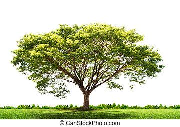 grönt träd, landskap, natur