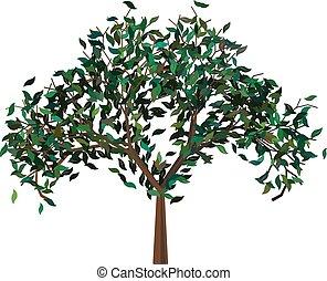 grönt träd, leafage