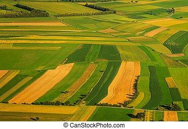 grønne, felter, aerial udsigt, foran, høst